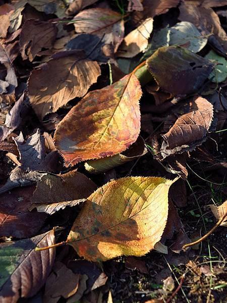 color leaves 25.JPG