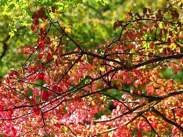 color leaves 27.JPG