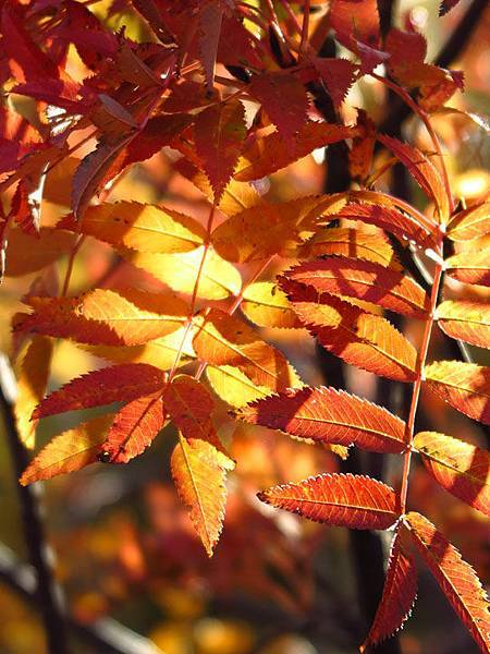 color leaves 28.JPG