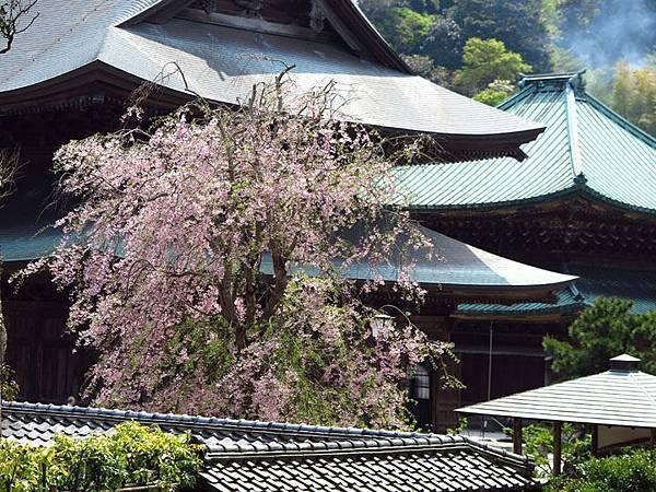 Kamakura c6.JPG