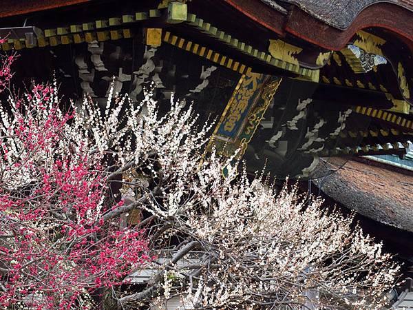 Kyoto 6a1.JPG
