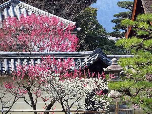 Kyoto 8a1.JPG