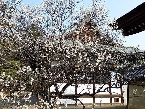 Kyoto 8a4.JPG