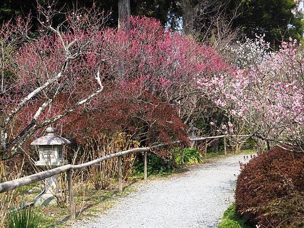 Kyoto 8b5.JPG