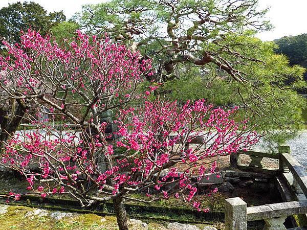 Kyoto 8b7.JPG