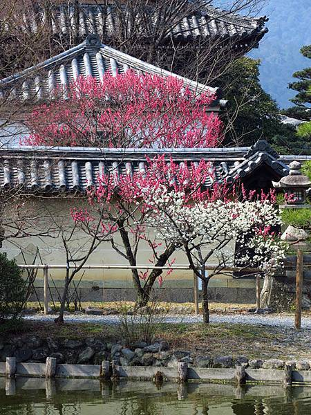 Kyoto 8b8.JPG