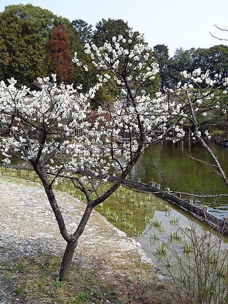 Kyoto 8b12.JPG