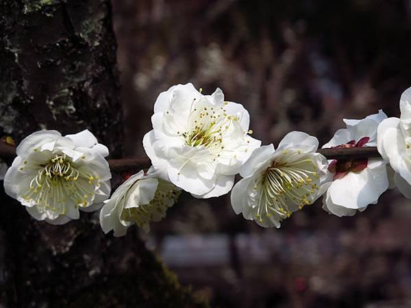 Kyoto 8c1.JPG
