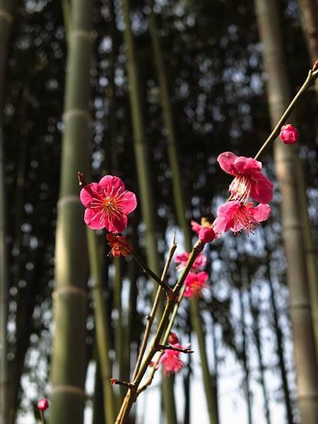 Kyoto 8e3.JPG