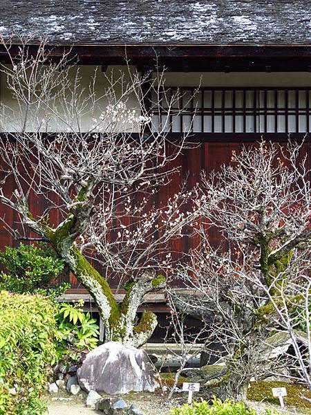 Kyoto 9c1.JPG