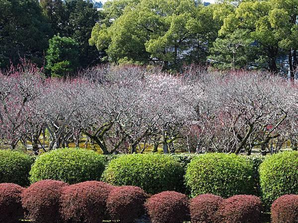 Kyoto 9e1.JPG