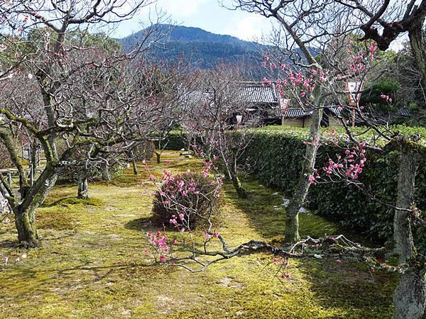Kyoto 9e2.JPG
