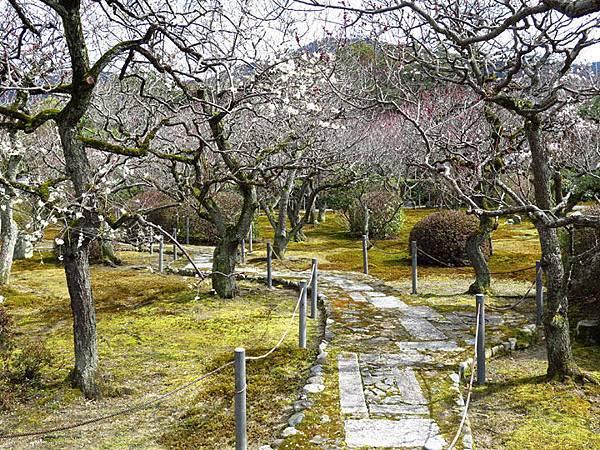 Kyoto 9e3.JPG