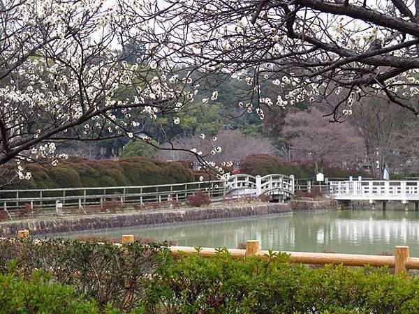 Kyoto 11a2.JPG
