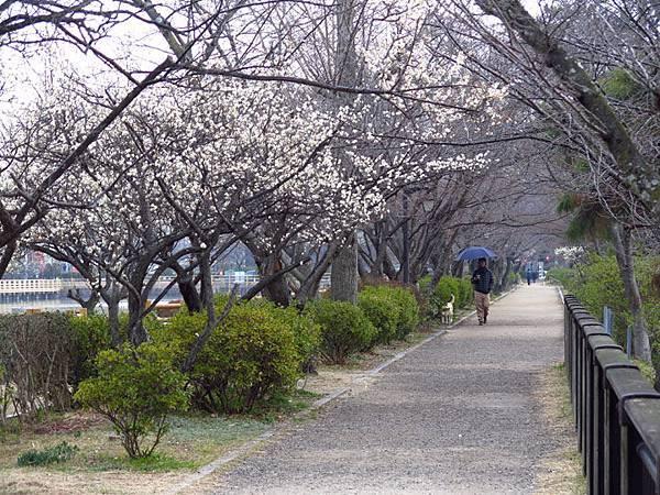 Kyoto 11a3.JPG