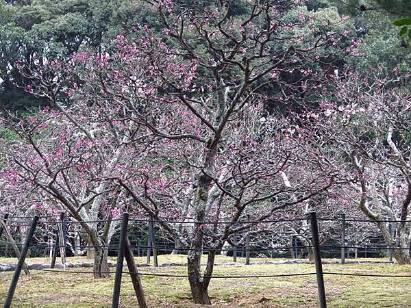 Kyoto 11a4.JPG