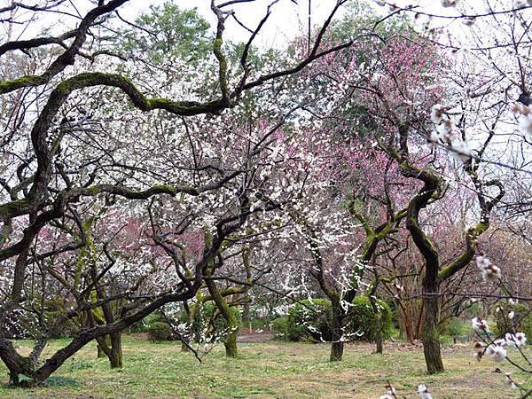 Kyoto 11b6.JPG