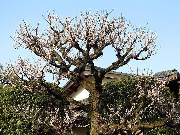Kyoto 11d2.JPG