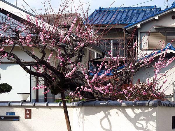Kyoto 11d3.JPG