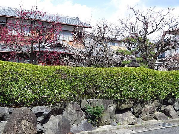 Kyoto 11d6.JPG