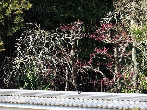 Kyoto 11d7.JPG