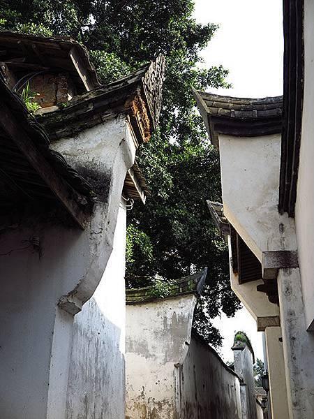 fuzhou y3