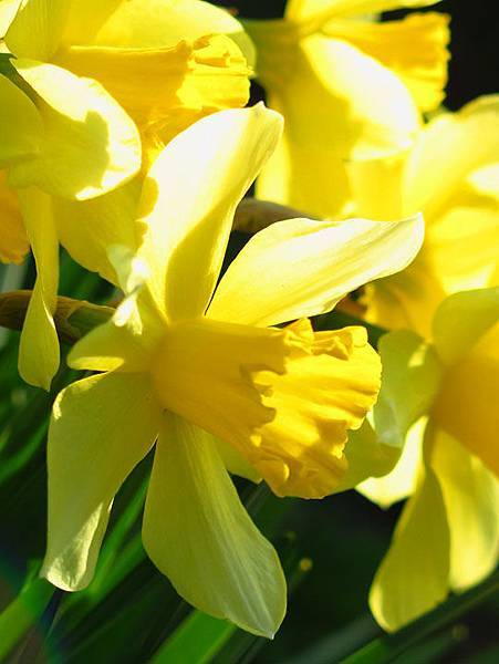 flower 7.JPG