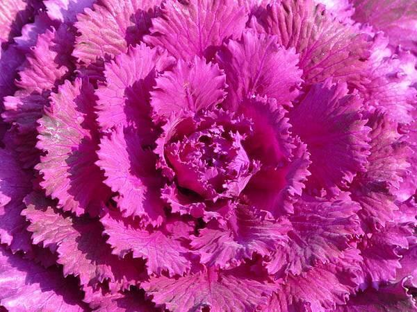flower 8.JPG