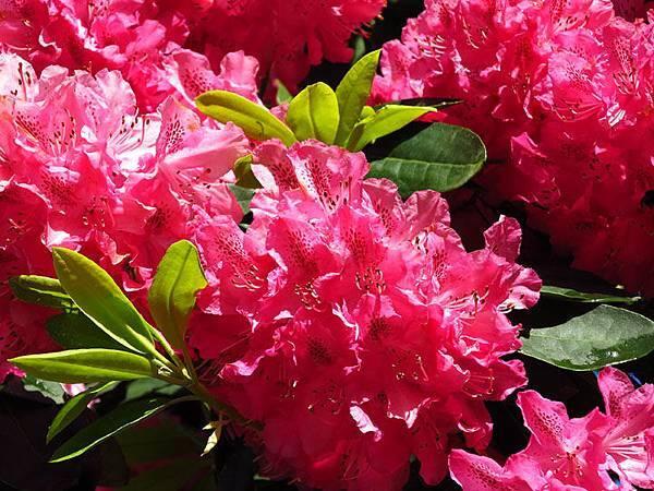 flower 15.JPG