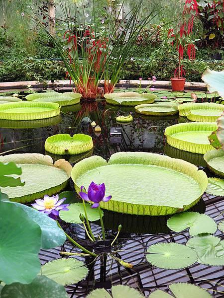 Kew a5.JPG