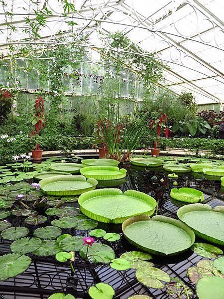 Kew a6.JPG