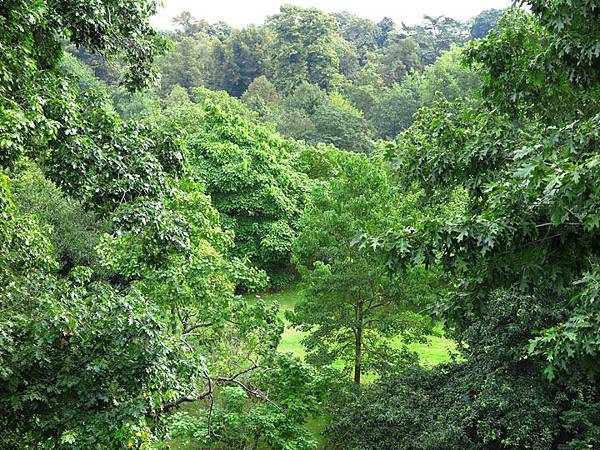 Kew b3.JPG