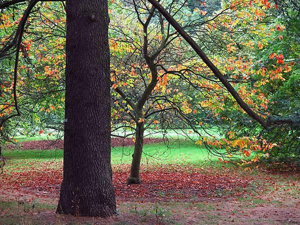 Kew d1.JPG