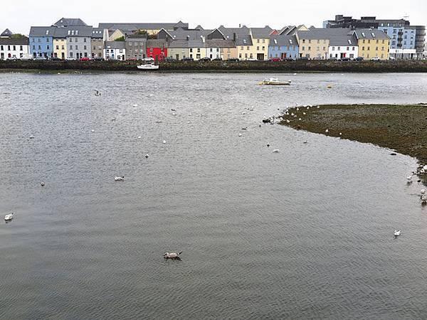 Galway g4.JPG