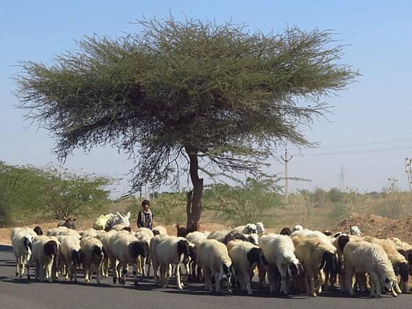 Rajasthan a1.JPG