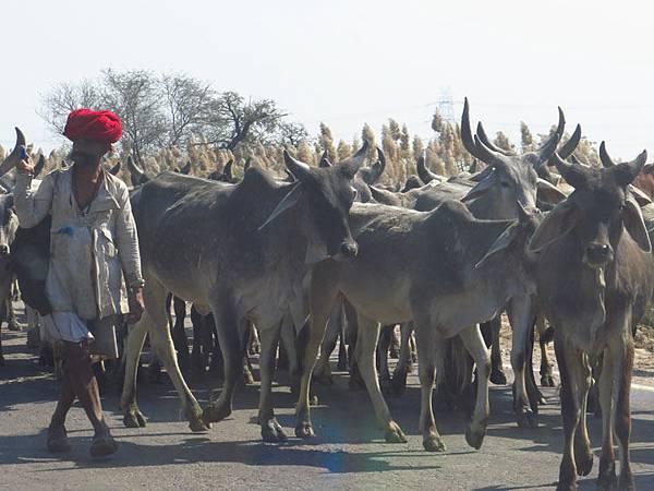Rajasthan a2.JPG