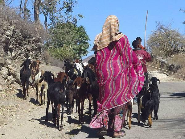 Rajasthan a3.JPG