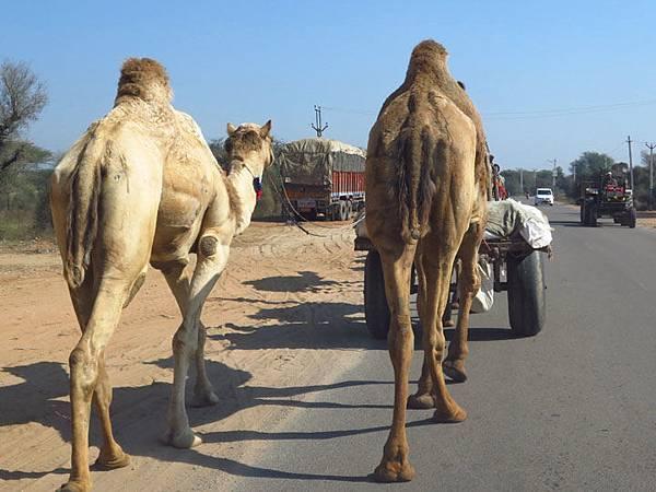 Rajasthan a6.JPG