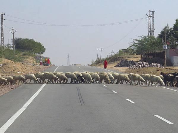 Rajasthan a8.JPG