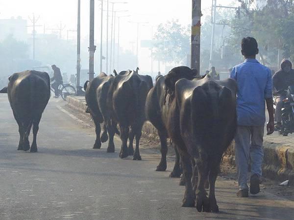Rajasthan a7.JPG