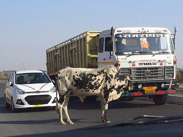 Rajasthan a9.JPG