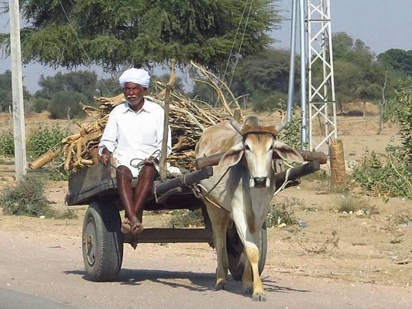 Rajasthan d1.JPG