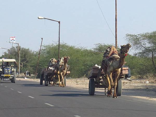 Rajasthan d5.JPG