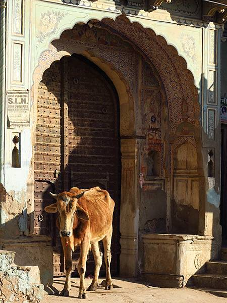 Rajasthan h12.JPG