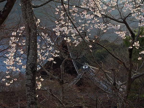 Kyoto ai1.JPG