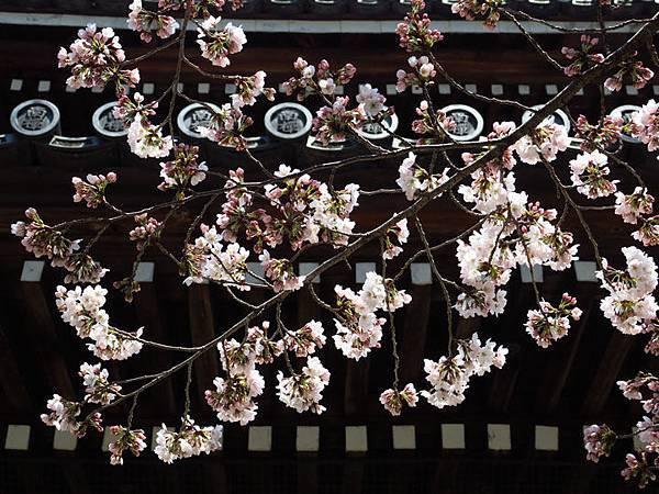 Kyoto ak1.JPG