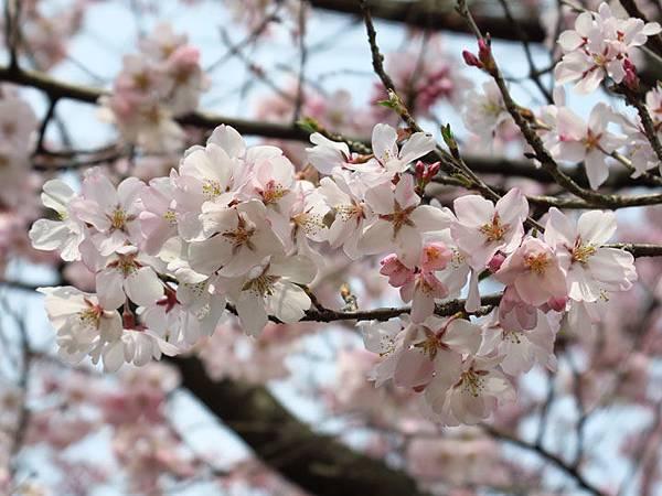 Kyoto ar2.JPG