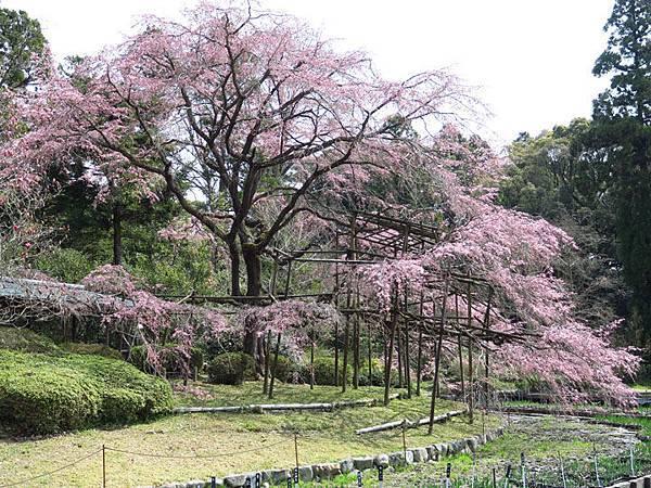 Kyoto as1.JPG