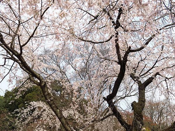 Kyoto as3.JPG