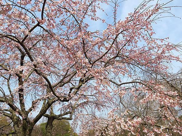 Kyoto av1.JPG